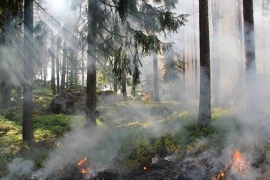 В Карелии площадь лесных пожаров превысила 10 тысяч гектаров