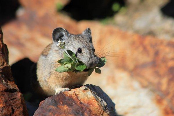 Белок BAM15 помог без диеты похудеть мышам