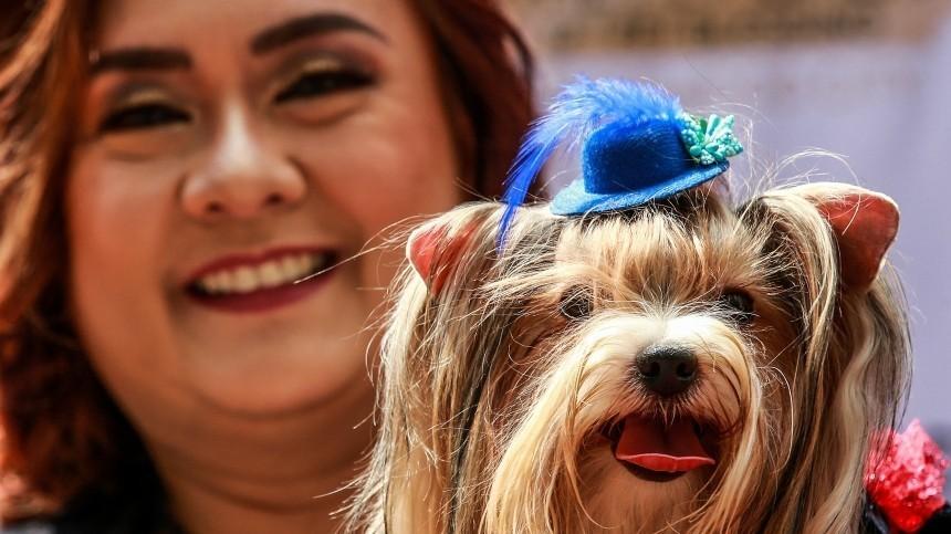 Исследования: во время пандемии люди растолстели и стали вкуснее кормить собак