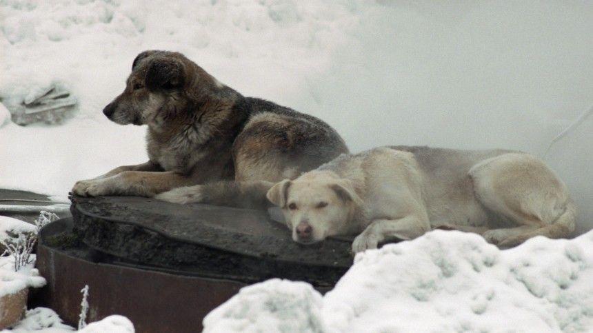 Представляют опасность? Сколько бездомных собак живет в российских регионах