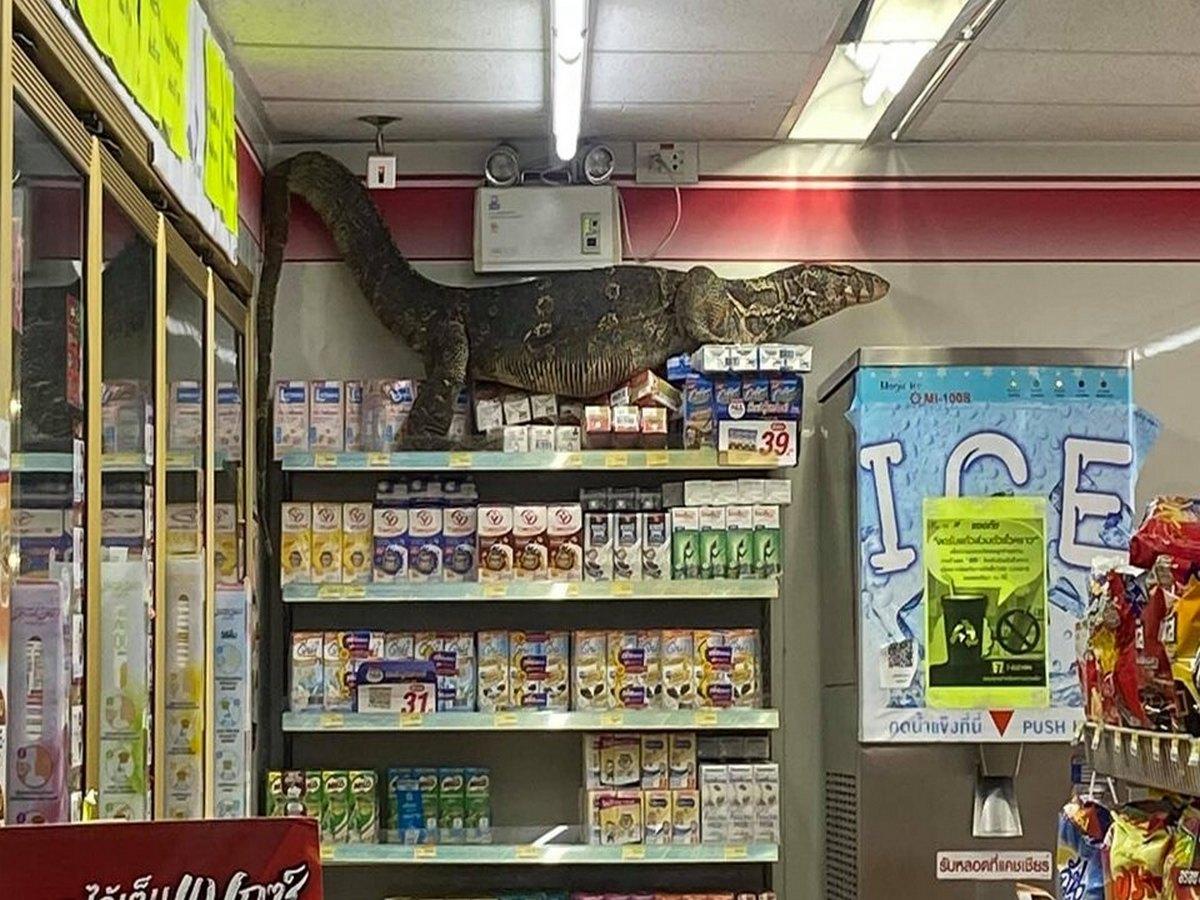 Пользователи обсуждают видео нашествия варана на супермаркет