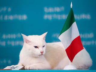 Кот Ахилл предсказал победу сборной Италии