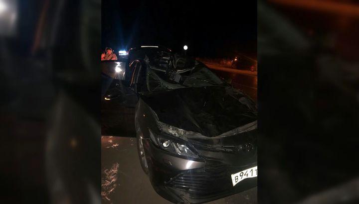 Замглавы одного из крупнейших заводов Рязани погиб в столкновении с лосем