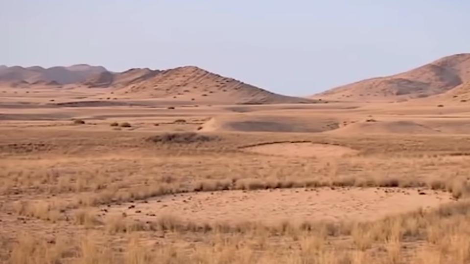 Ядовитые 'ведьмины круги': откуда они берутся в пустынях и лесах