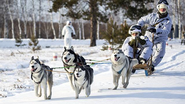 NRK (Норвегия): российские военные используют собак и оленей как транспортное средство в Арктике. Хорошая идея, считает оленевод