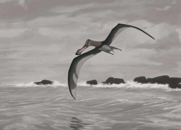 В Марокко обнаружили новый вид птерозавра с острым клювом