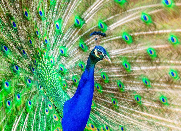 Учёные выяснили, почему в живой природе преобладает синий цвет