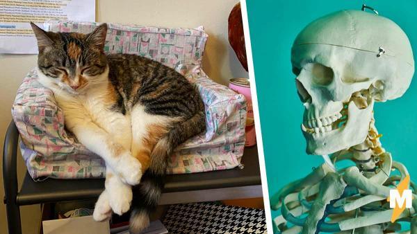 Люди открыли особую реакцию кошек на хеллоуинские игрушки. Они верят: причина такого поведения криповая