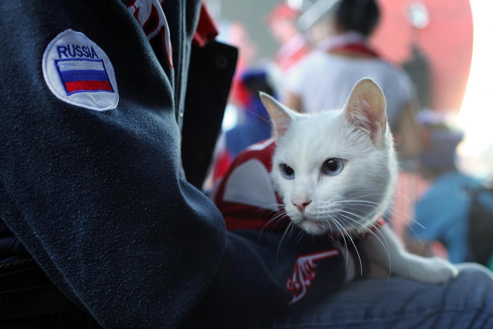 В России появится вакцина от коронавируса для животных