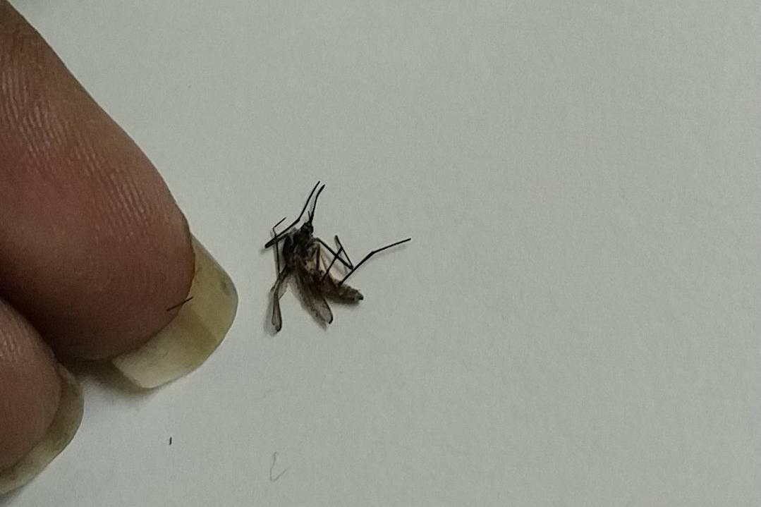 Девушка похвасталась тем, что делает с мёртвыми комарами, и теперь все считают её серийной убийцей